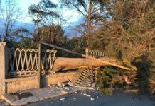 Maltempo albero spezzato Ceglie